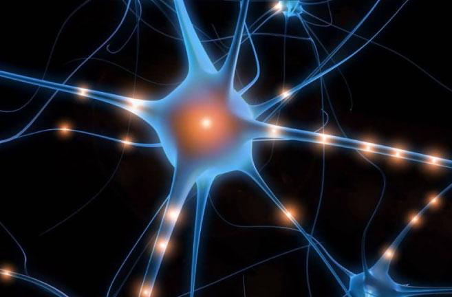 img-neuroprotettivo